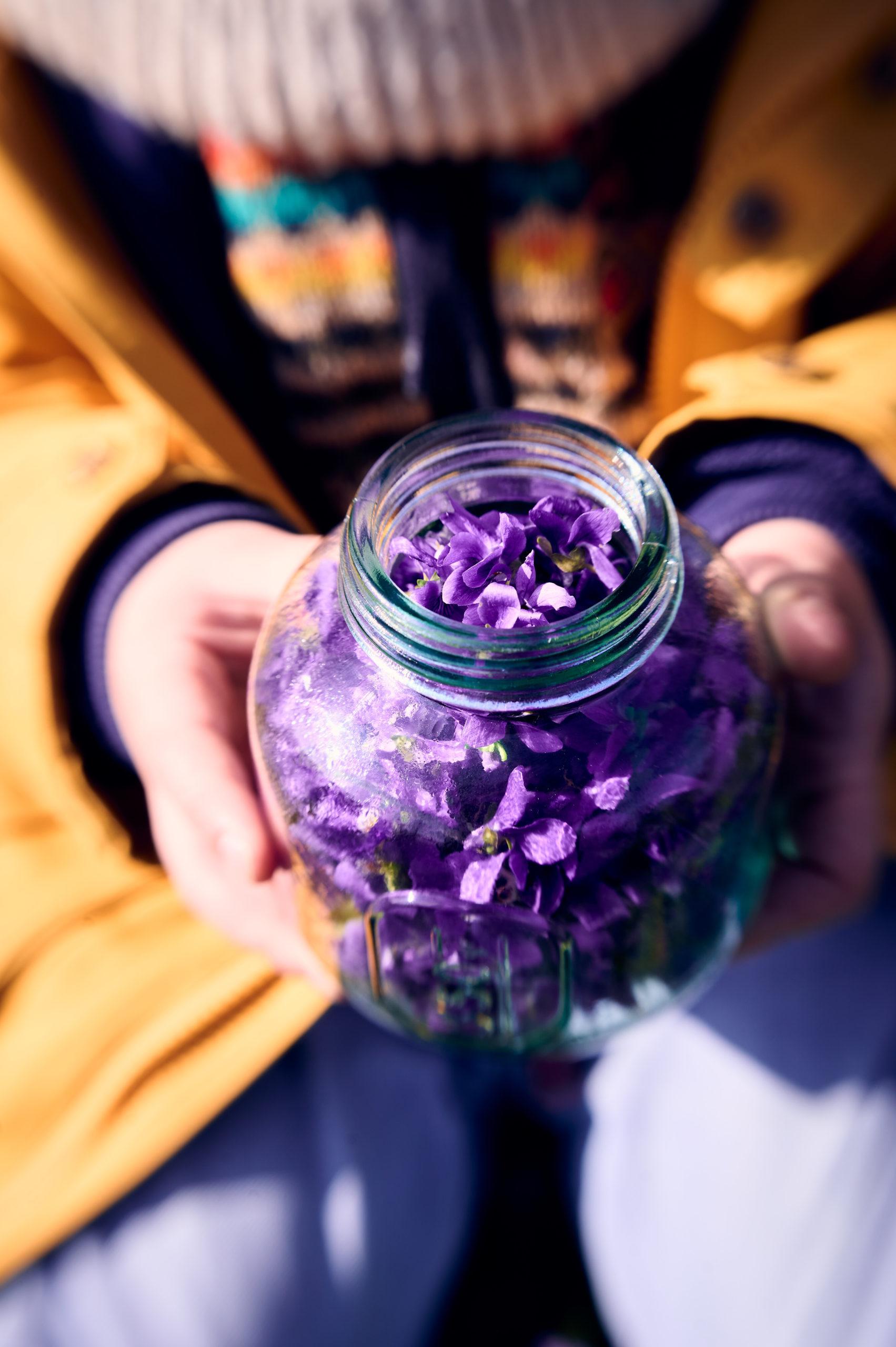 cueillette des violettes