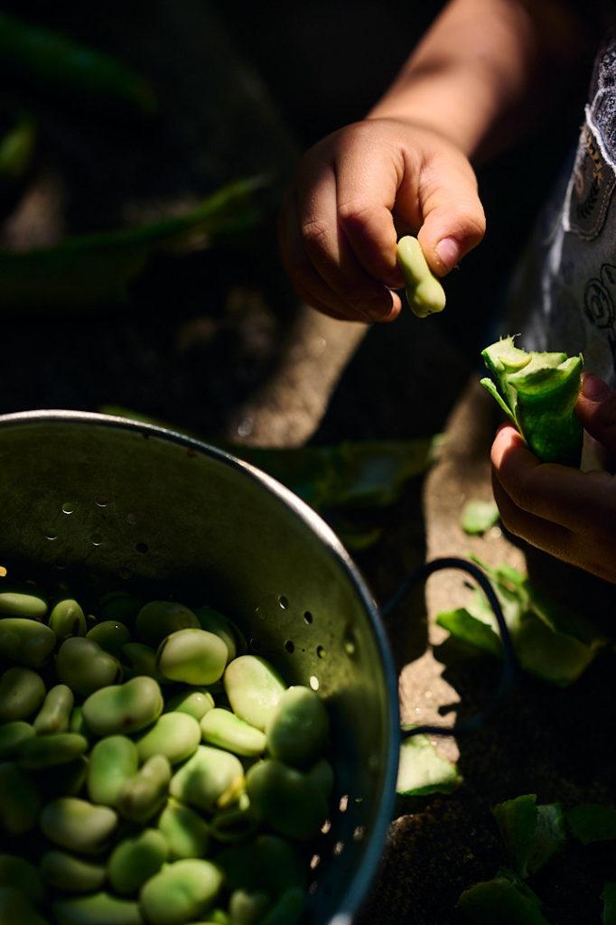 écossage des fèves