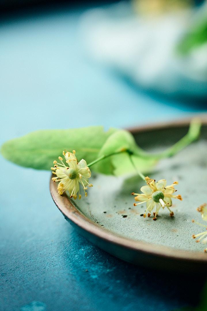 fleurs de tilleuls
